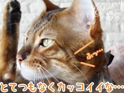ベンガル猫 銀河