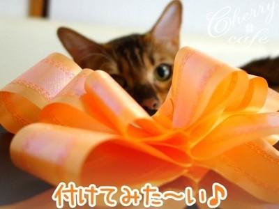 猫 リボン