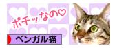 ベンガル猫 ランキング